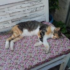 çaşıda ki bu kedi her zaman dikkatimi çekiyor ve ne zaman gitsem hep uyur vaziyette, rahat kedi..